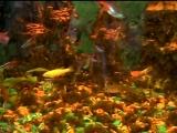 Мой аквариум 1