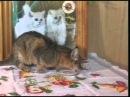 Уроки доброты 4 Юрия Куклачева 2004