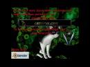 Короновирус кошек (FIP, ИПК)