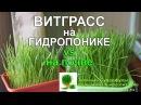 ВИТГРАСС на ГИДРОПОНИКЕ vs Пшеница земельное проращивание
