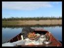 Таёжники (часть 3) Орлан-белохвост или впереди ещё 150 км