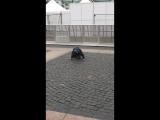 27052017 - день города СПб