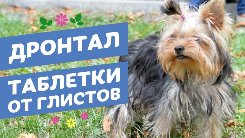 Таблетки от глистов Дронтал для кошек и собак