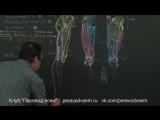 Анатомия Рея: Бедра и ягодицы