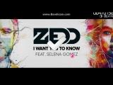 Zedd  I want  you to know
