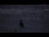 «Страна птиц (10). Тетеревиный театр» (Документальный, орнитология,