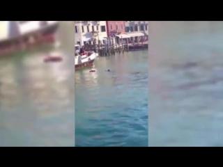В Венеции беженец утонул под смех и выкрики