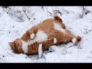 Смешные кошки приколы про кошек и котов 2017 53 Видео приколы - Funny мысықтар