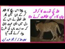 Allah Ki Qudrat Ka Krishma || Allah Ki shan || Miracle Of Allah || Ajeeb O Ghareeb