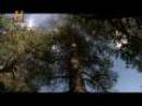 Mundo Jurásico - Cazador Cazado - Pate 1 de 7