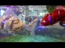 Robotic fish at Henn na Hotel Maihama Tokyo Bay [RAW VIDEO]