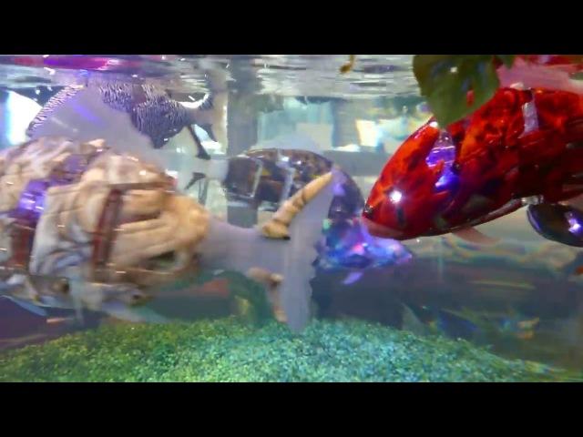 Robotic fish at Henn na Hotel Maihama Tokyo Bay [RAW VIDEO]   Робо-рыба