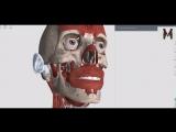 Мышцы головы ( жевательные мышцы) - детальный обзор 3д