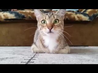 Реакция кота на хоррор