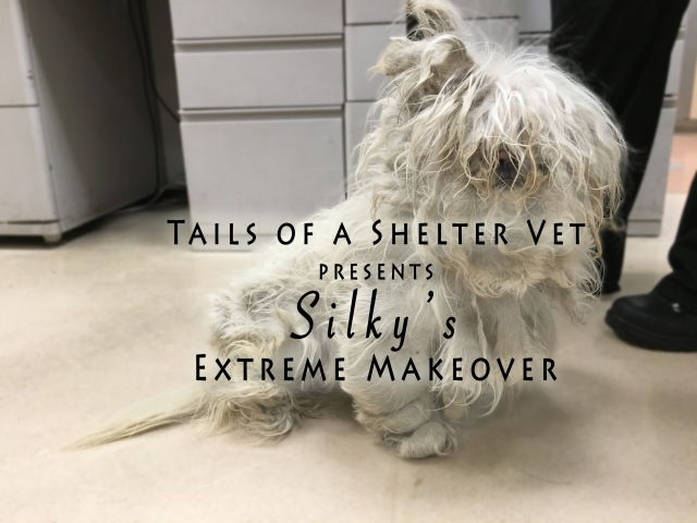 Silky's Extreme Makeover Tails of a Shelter Vet