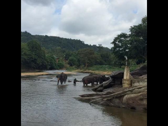🐘 Приют для диких слонов на Шри-Ланке (Алина-Тур)