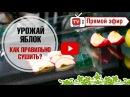 Как правильно сушить яблоки? 🍎 Мастер класс от hitsadTV
