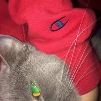 Артём Котов