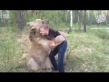 Ничего необычного, просто мужик борется с медведем