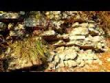 Franz Joseph Haydn (1732 -1809) Sonata-Partita C-dur Part1 Allegro