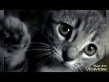 Грустная песня про кота ( Дворовый кот)