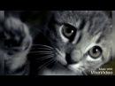 Грустная песня про кота Дворовый кот 😢😥😔 до слёз