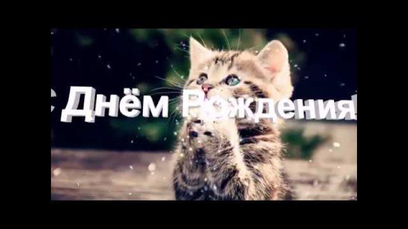 Поздравление с Днюхой от милых котиков
