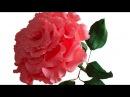 Большая роза из гофрированной бумаги, мастер класс