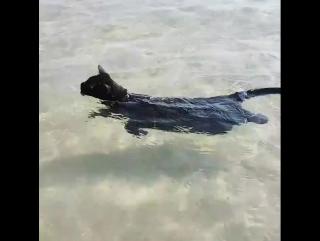 Кошка обожает плавать