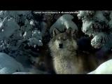 волки под музыку Nightwish - волынка в рок-обработке. Picrolla