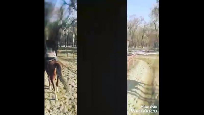 «Лошадь гораздо щедрее, чем человек, одарена инстинктами и чувствами. Слышит лошадь лучше кошки, обоняние тоньше, чем у собаки,