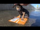 Бездомные собаки до и после того, как их приютили