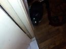 Смешные коты, приколы про животны cute cats and kittens funny videos
