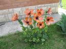 Цветы из пластиковых бутылок на даче Идеи для дачи сада