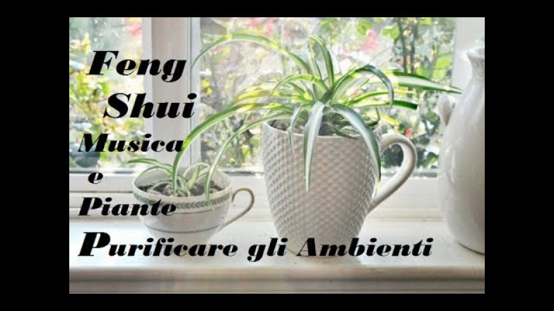 MUSICA Feng Shui,VIBRAZIONI per Aumentare il Potere di Purificazione delle Piante