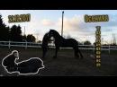 Wester Фризский жеребец конный блог Осенняя тренировка
