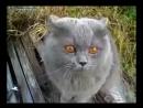 Злющий кот
