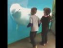 Дельфин пугает детей )хахах