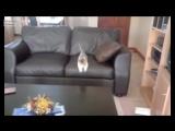 Смешные кошки приколы про кошек и котов 2017 #19 (Прыжки Котов - удачные и не очень)