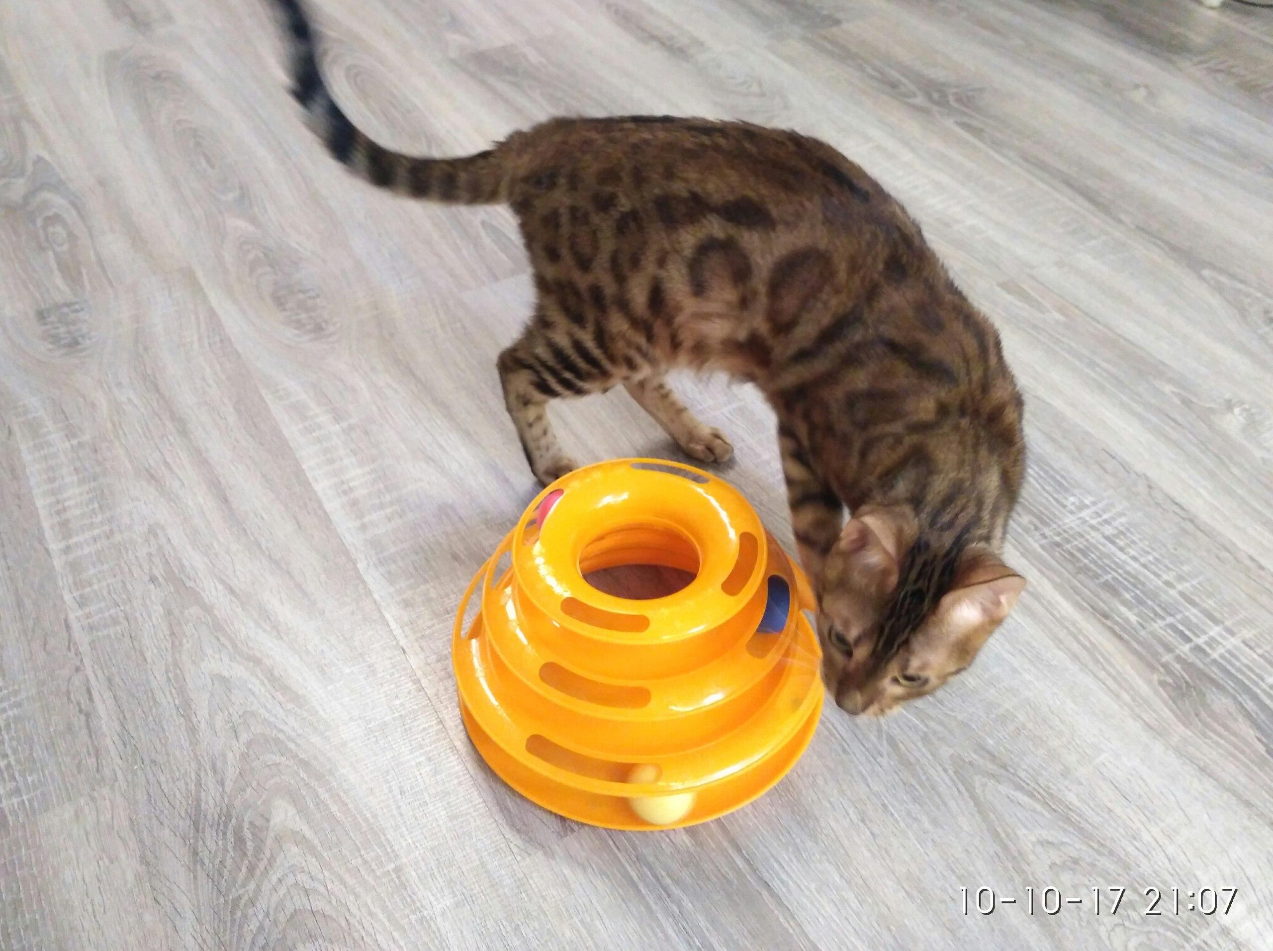 Всем родителям хвостатых и усатых Рекомендую к приобретению игровой комплекс для котиков и кошечек У нас это уже второй