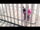 Клетки для собак и кошек в Уфе | САН