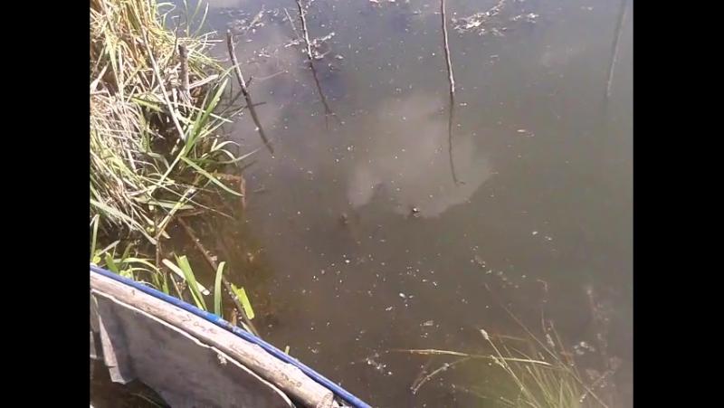 замер темп воды журавлевка