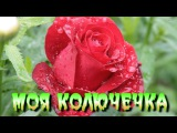 МОЯ КОЛЮЧЕЧКА -  ЕВГЕНИЙ МИХА  монтаж ролика С Тюнев