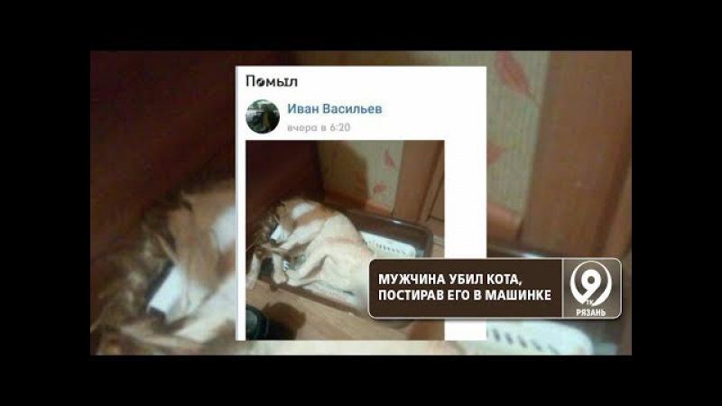 Житель Ухты постирал кота в стиральной машине. Животное погибло. «9 телеканал» Р ...