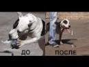 Одержимость пластиковыми бутылками Телепроект Искусство общения с собакой