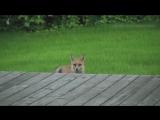 Животные поют Where Is My Mind (The Pixies)
