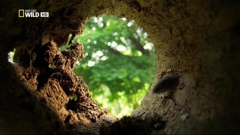 Дикая природа Миссисипи (2011) бушует вода