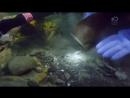 Золотая лихорадка Берингово море Под лёд 6 сезон 5 серия На троих Bering Sea Gold Under the Ice 2017