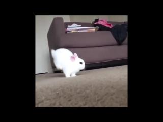 Hero Bunny Hoppy 😆