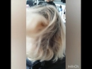 нанопластика блонд flex Floractive с приданием пепельного оттенка👍